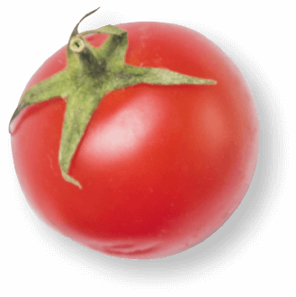 Tomato with white background